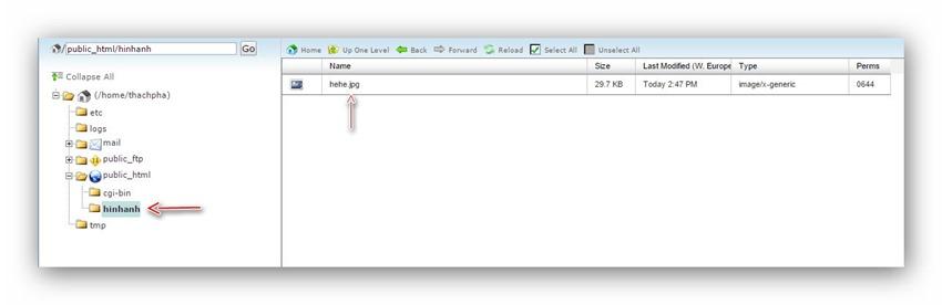 Quản lý tập tin/thư mục trên host dùng cPanel 11